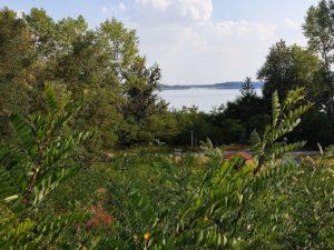 Blick auf den Muldestausee vom Campingplatz Heide-Camp. Der Blickwinkel ist erhöht und man schaut zwischen Bäumen und weiterem Grün auf den Muldestausse mit der Brücke zur Halbinsel Pouch und Goitzschesee.