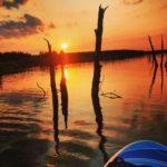 Baumstämme im rot-goldenen Gegenlicht auf dem Wasser der Goitzsche