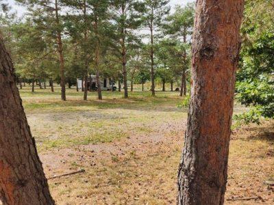 Wohnmobil Stellplatz Pouch Baum Entdeckung
