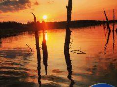 The Sunken Forest -Tress in Backlight