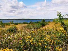 Blütenwiese am See